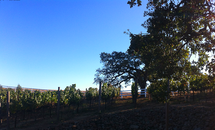 #SigHomesAdventures – Livermore Valley Wine Country