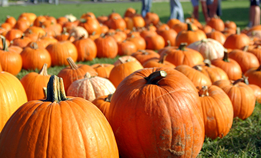 Fall for Pumpkin Mania