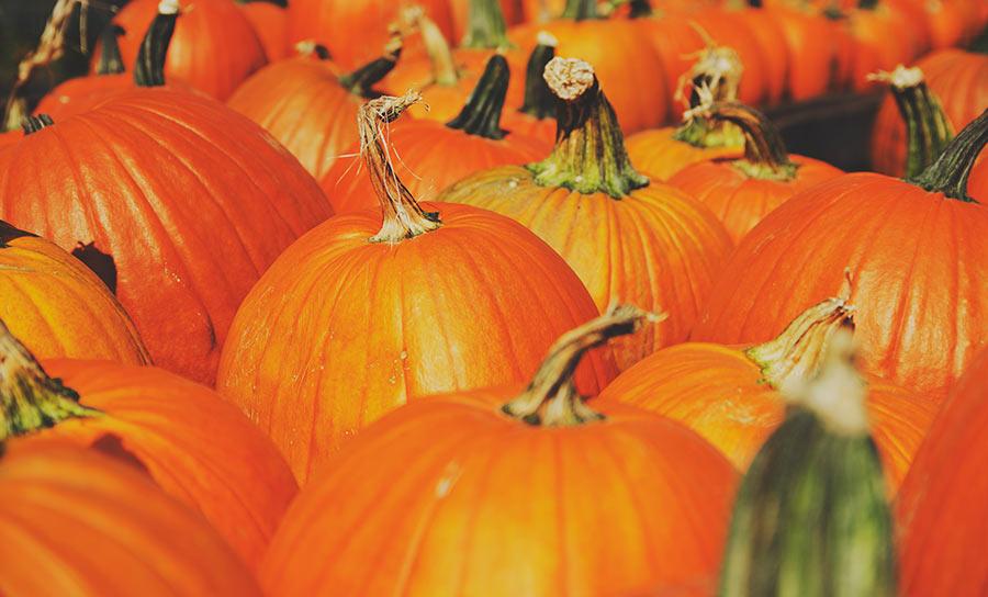 Halloween Made Easy – No Carve Pumpkins