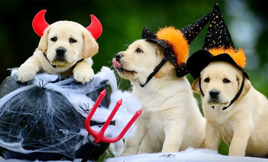 3rd Annual Howl-o-Ween Pet Costume Photo Contest