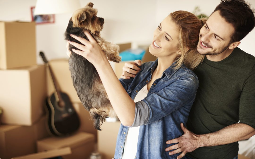 Top Tips: How to Make Your Pet's Move Stress-Free
