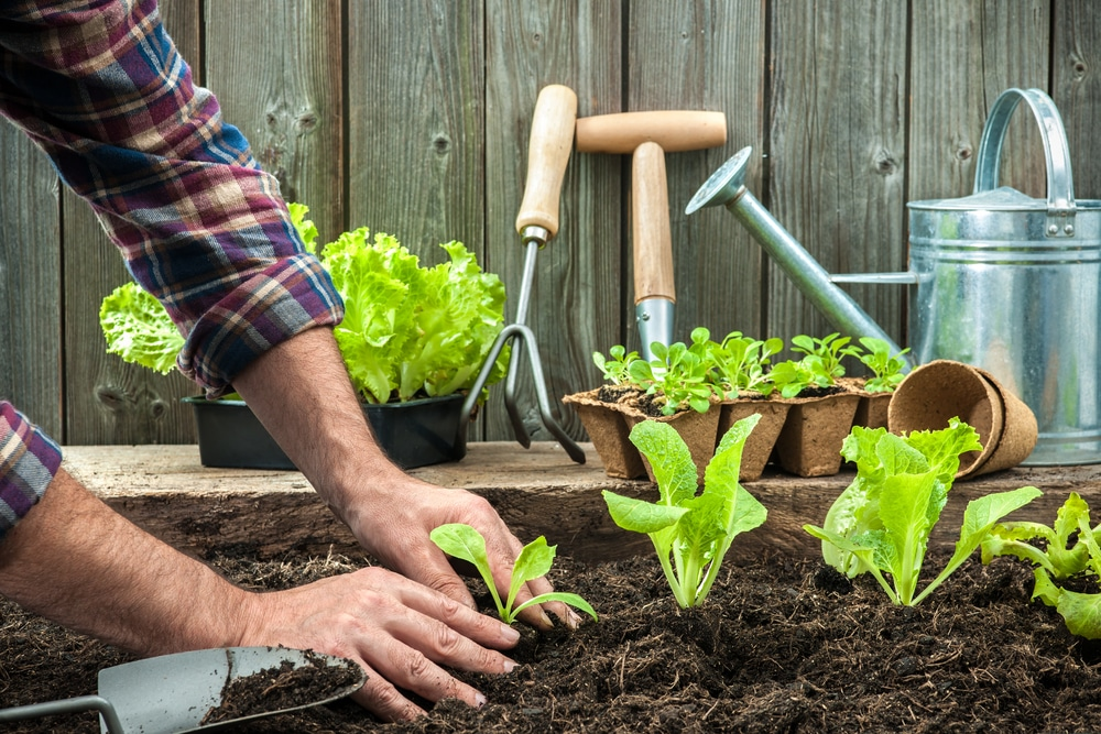 A First-Timer's Guide to Gardening
